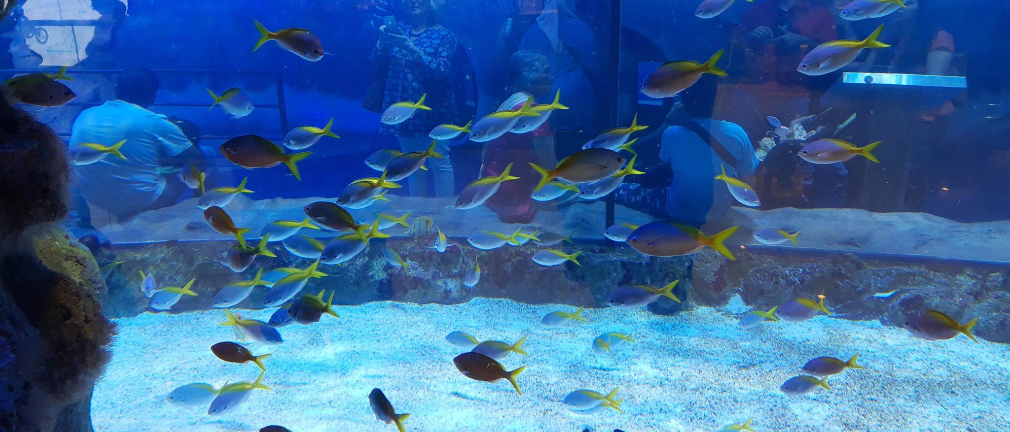 Dubai Aquarium a fontána